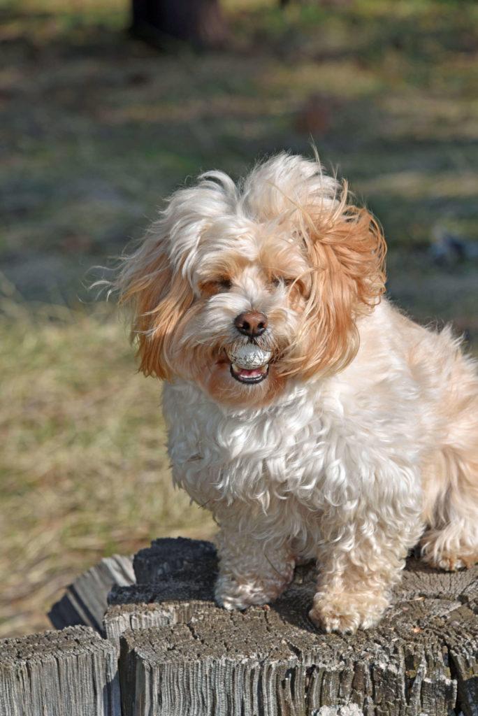 mobile dog grooming san diego